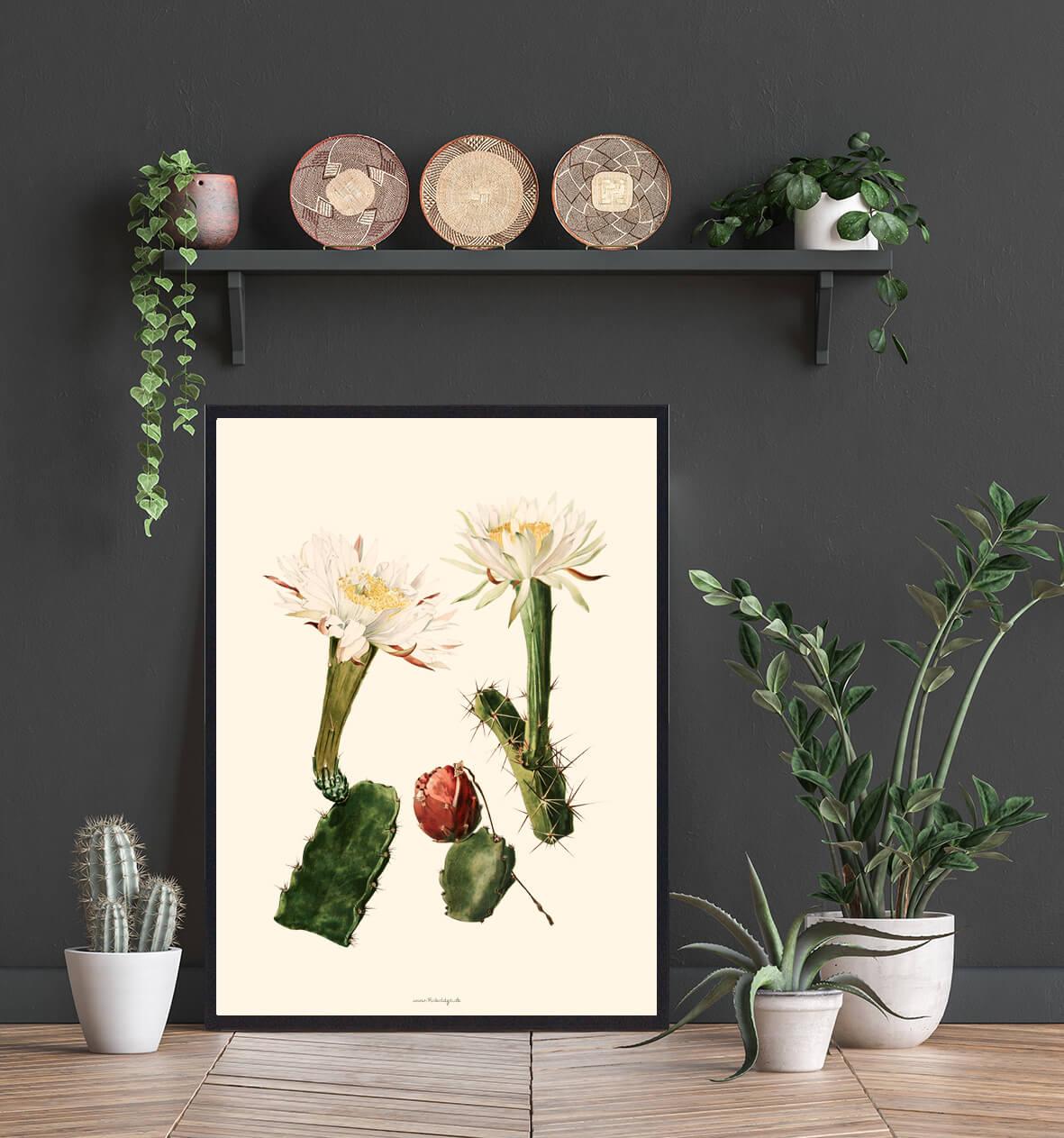 blomst-kaktus-plakat-3