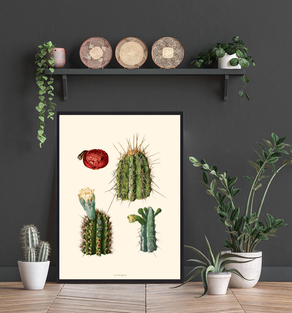 boligplakat-med-kaktus-3