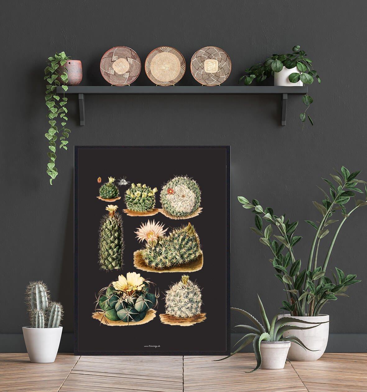 diverse-kaktus-plakat-2