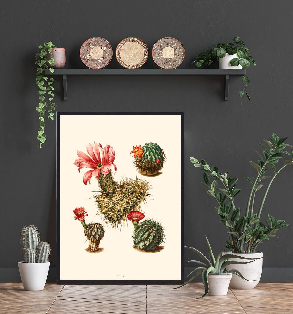 kaktus-Plakat-indretning-4