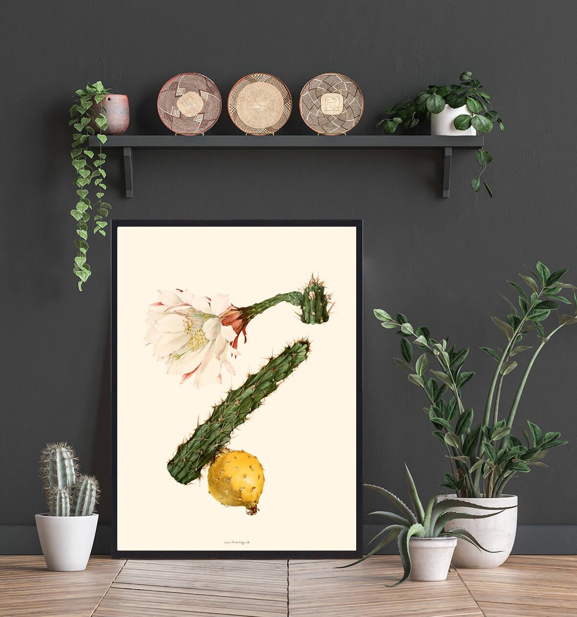 kaktus-billig-plakat-3