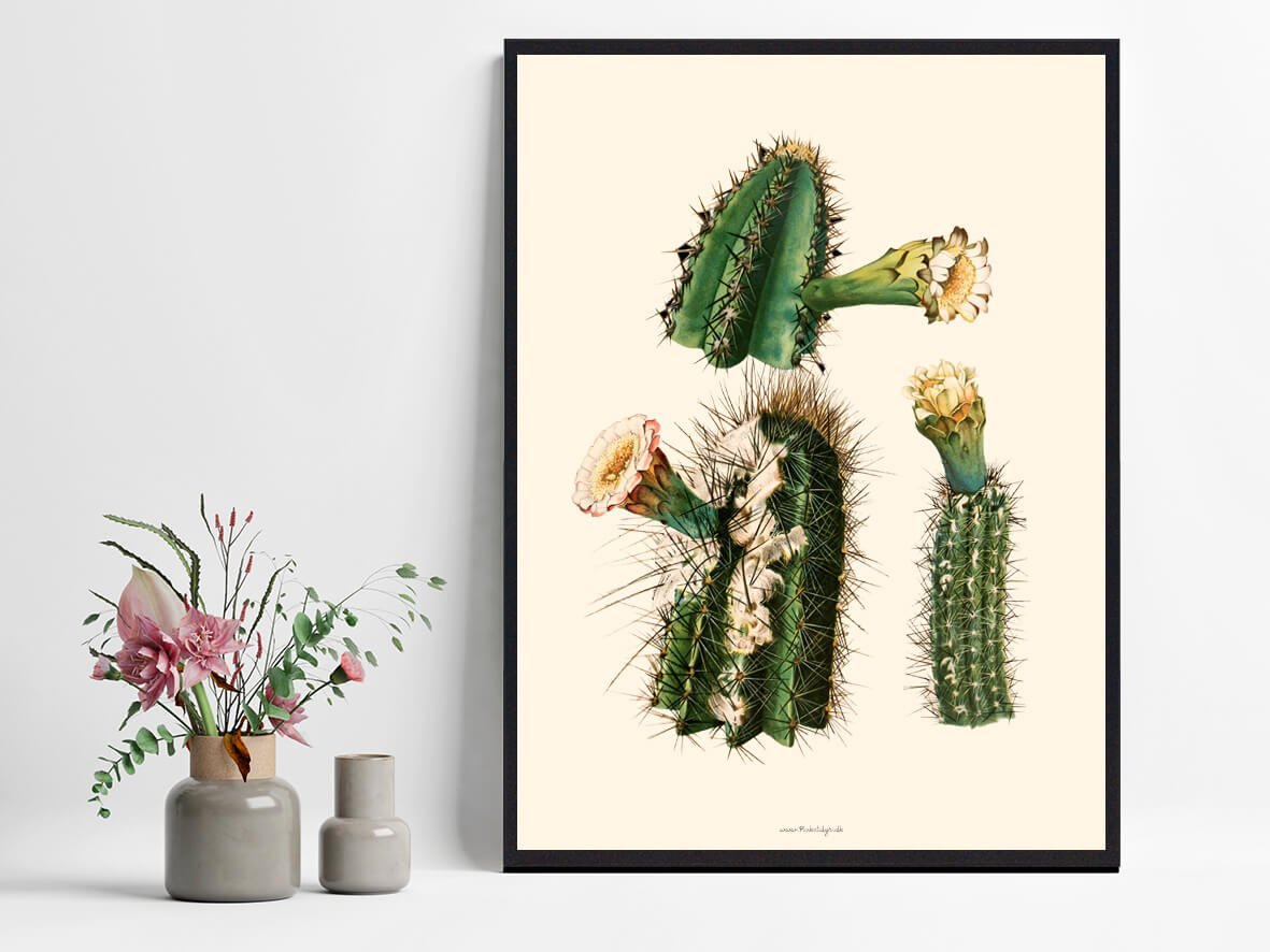 kaktus-blomst-plakat-1