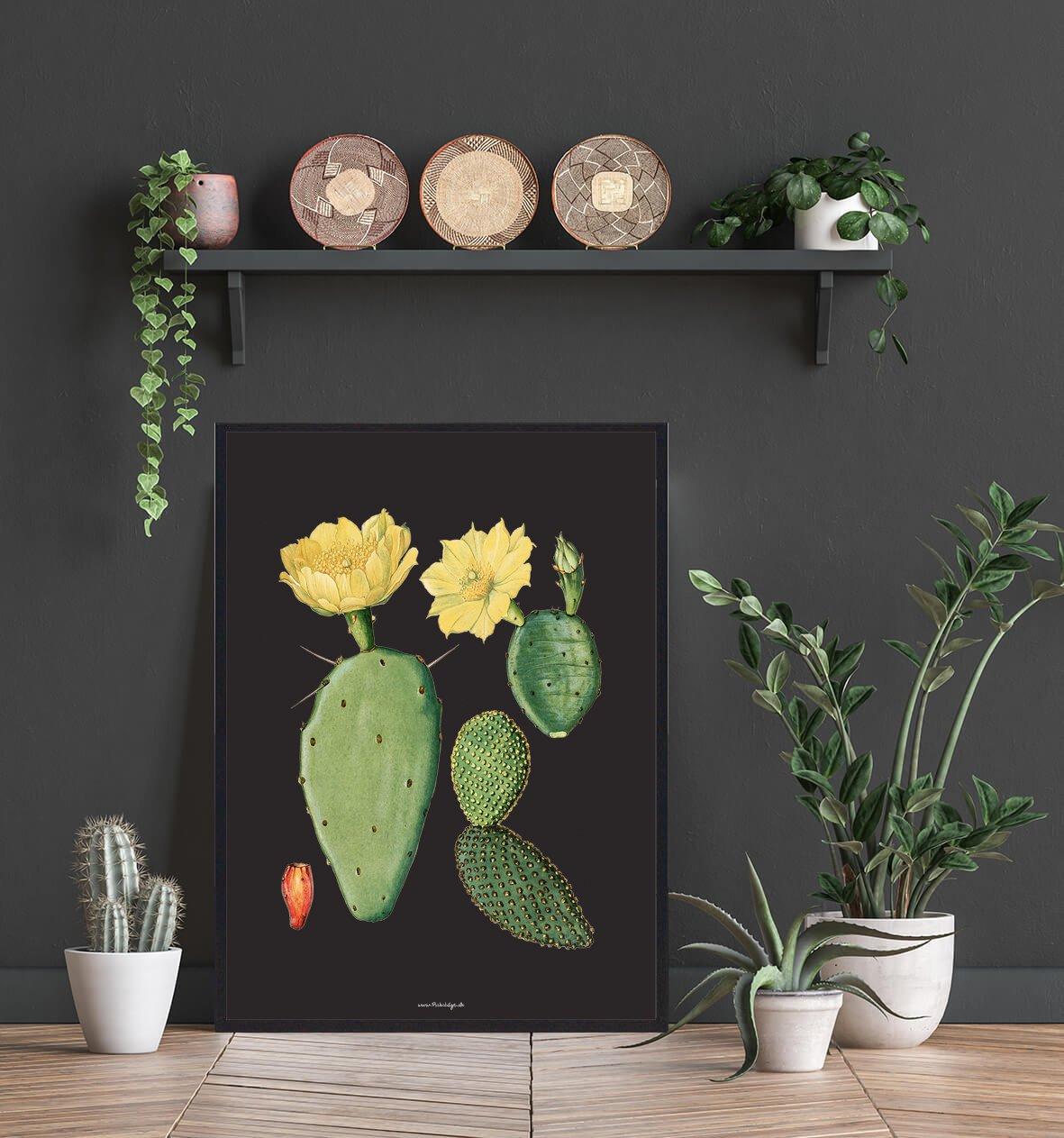 kaktus-blomst-plakat-2