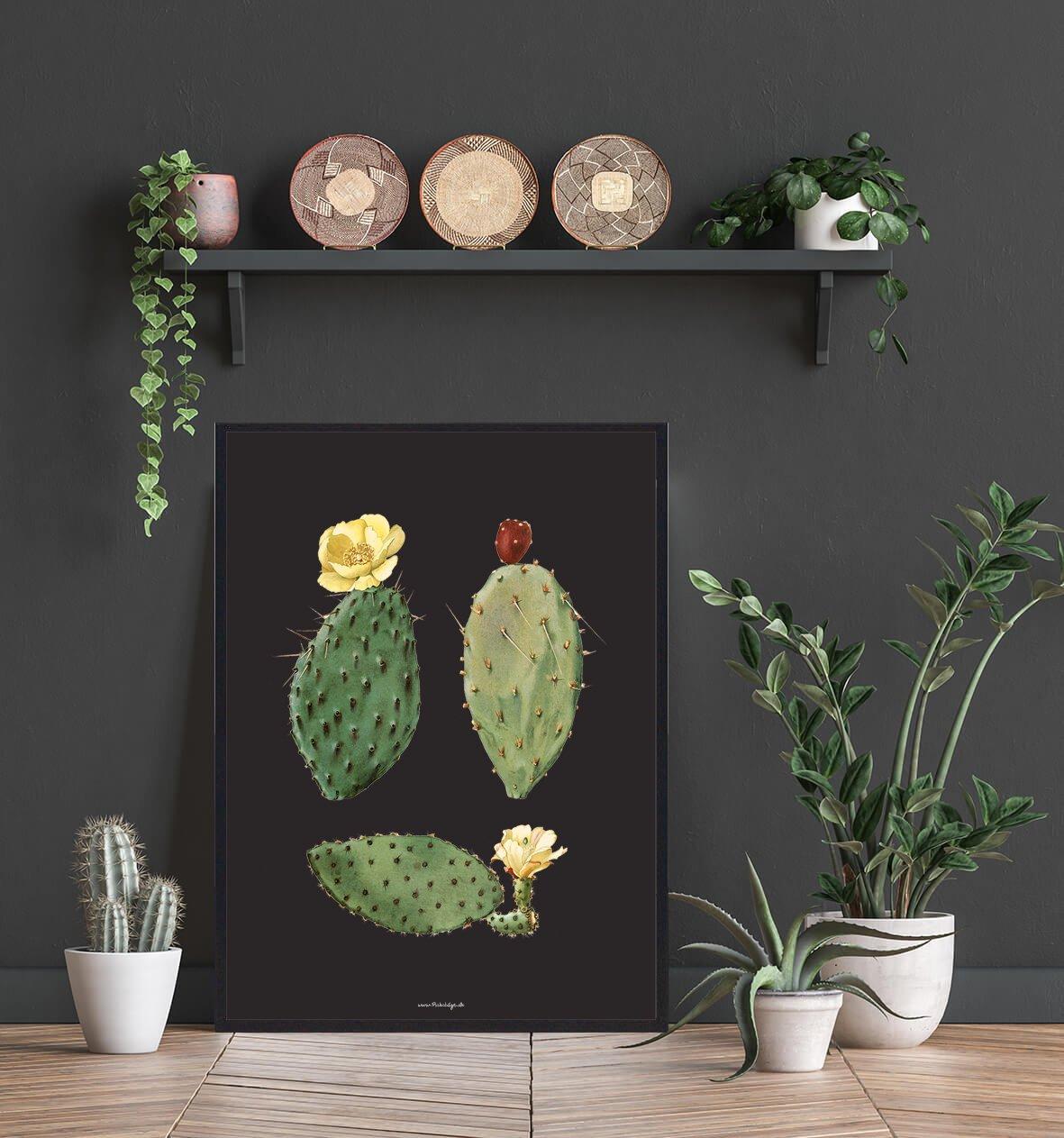 kaktus-med-blomst-2