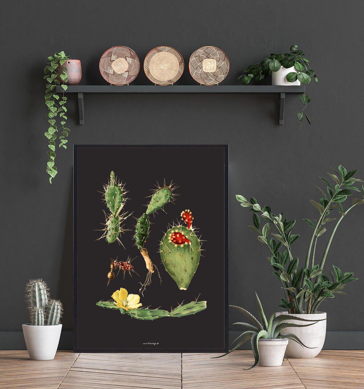 kaktus-natur-bolig-2