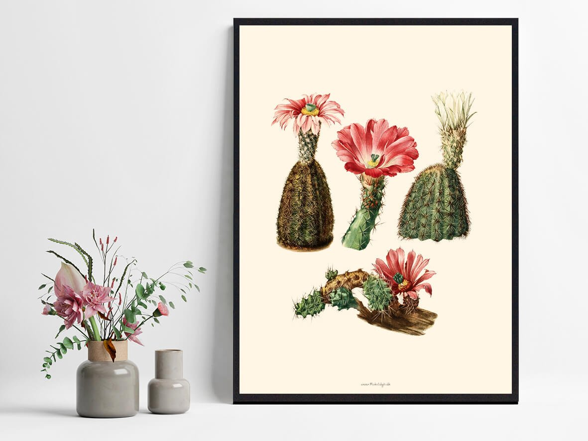 kaktusPlakat-billig-1