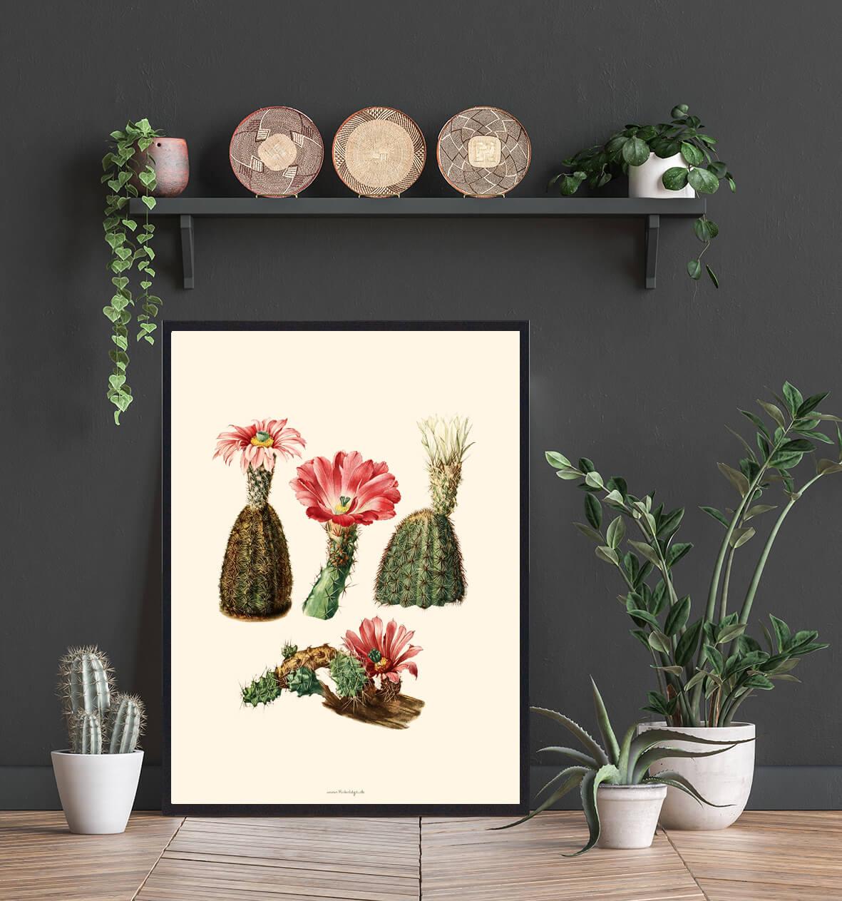 kaktusPlakat-billig-3