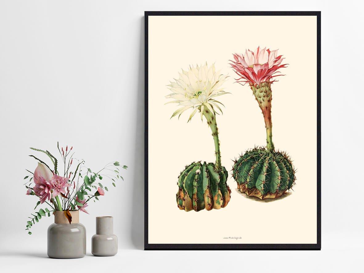 kaktusPlakat-indretning-1