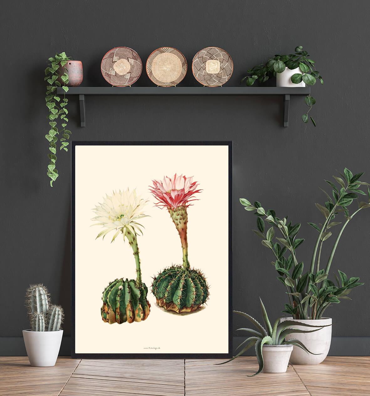 kaktusPlakat-indretning-3