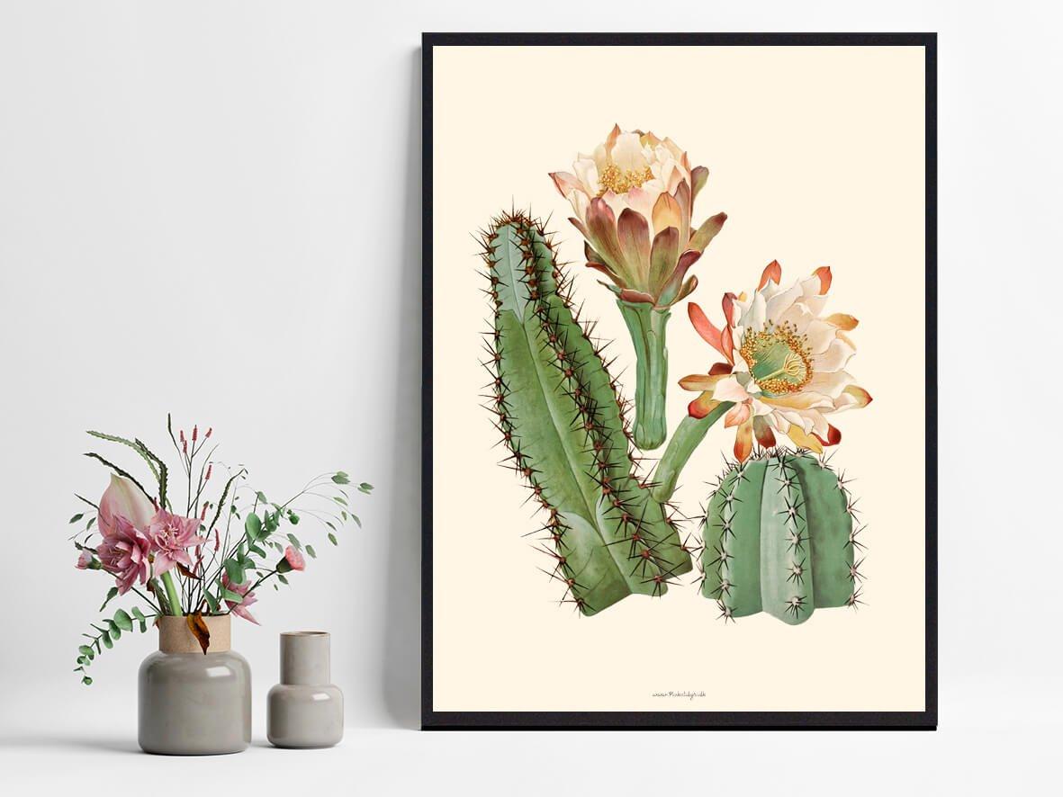 kaktusblomst-plakat-1