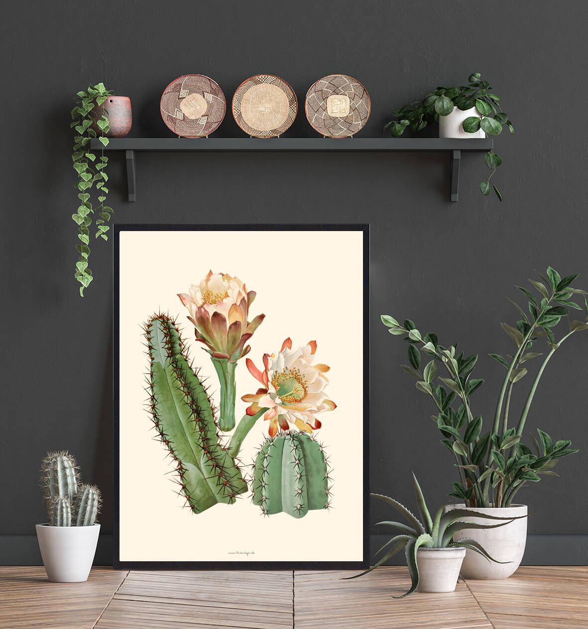 kaktusblomst-plakat-3