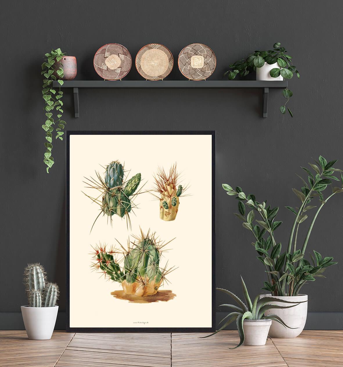 plakate-kaktus-plakat-3