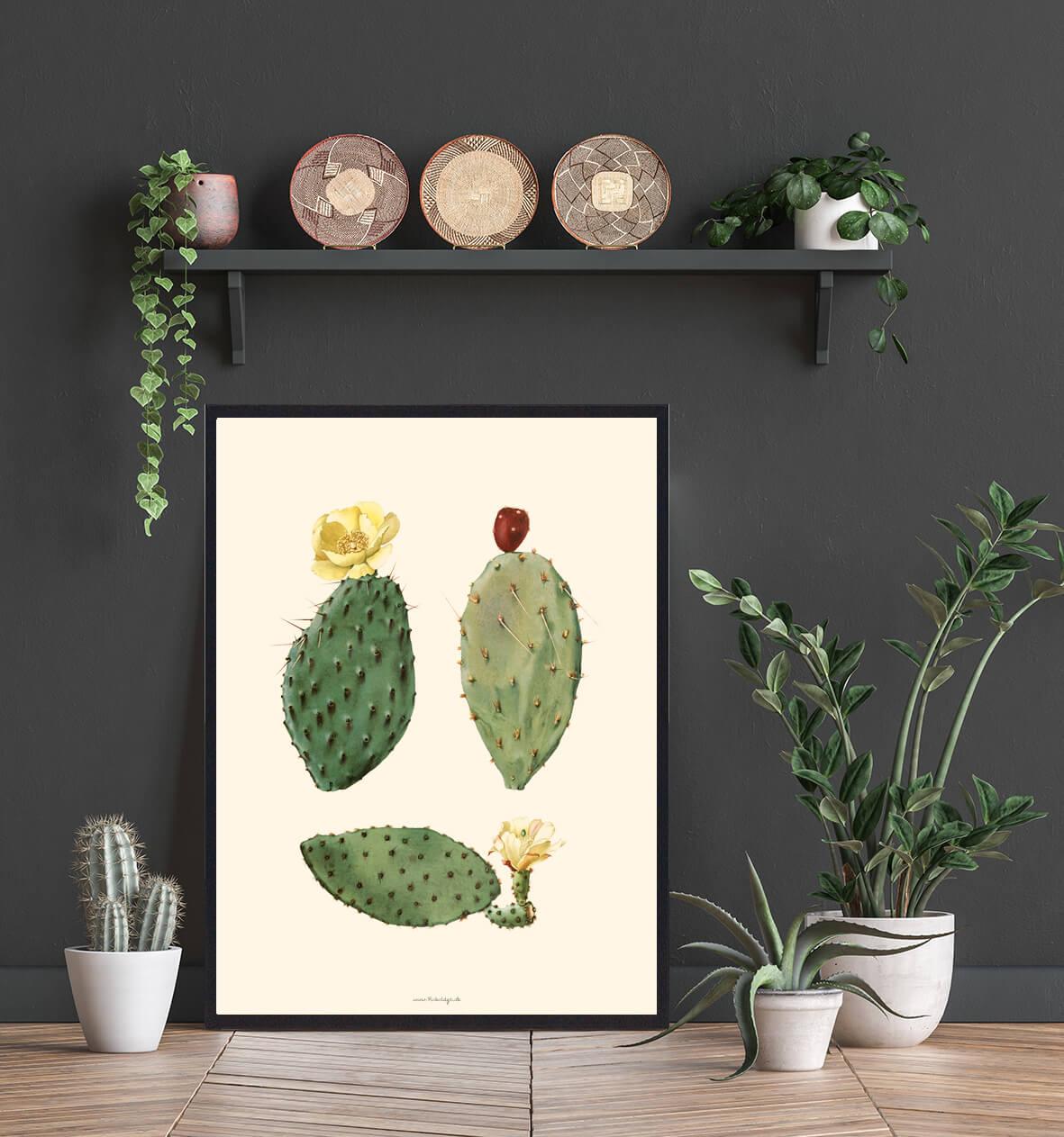 plakate-plakat-kaktus-3