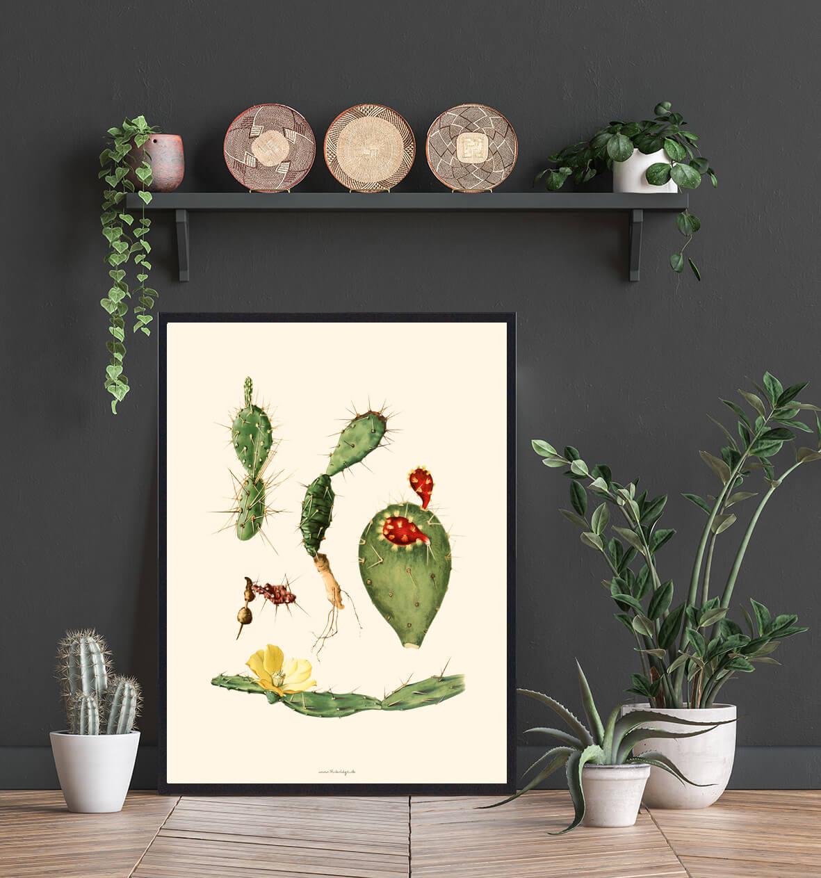 plakateplakat-kaktus-3