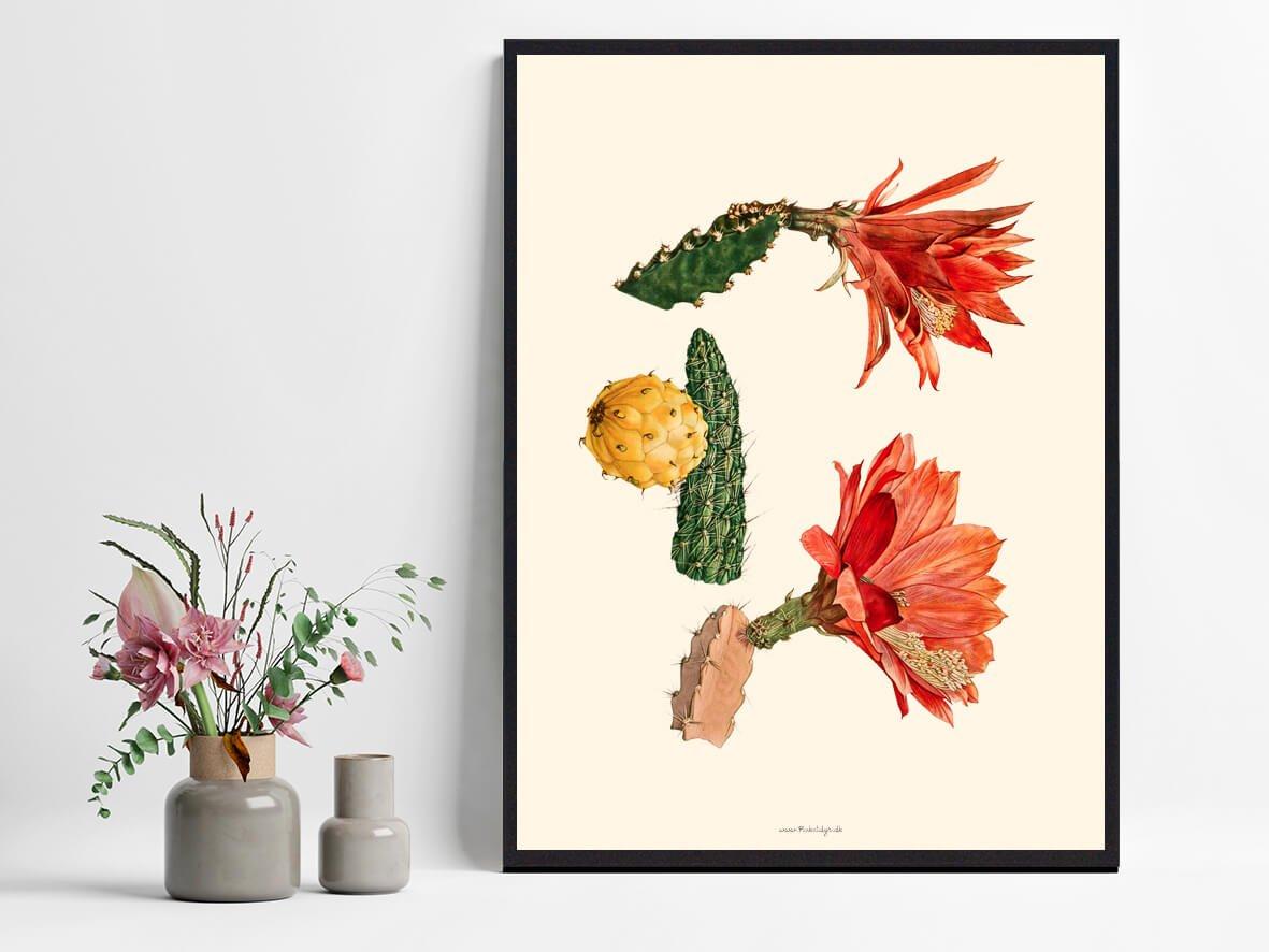 plante-kaktus-plakat-1