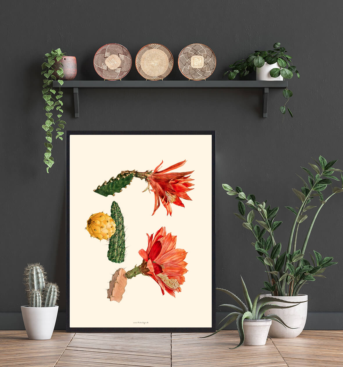 plante-kaktus-plakat-3