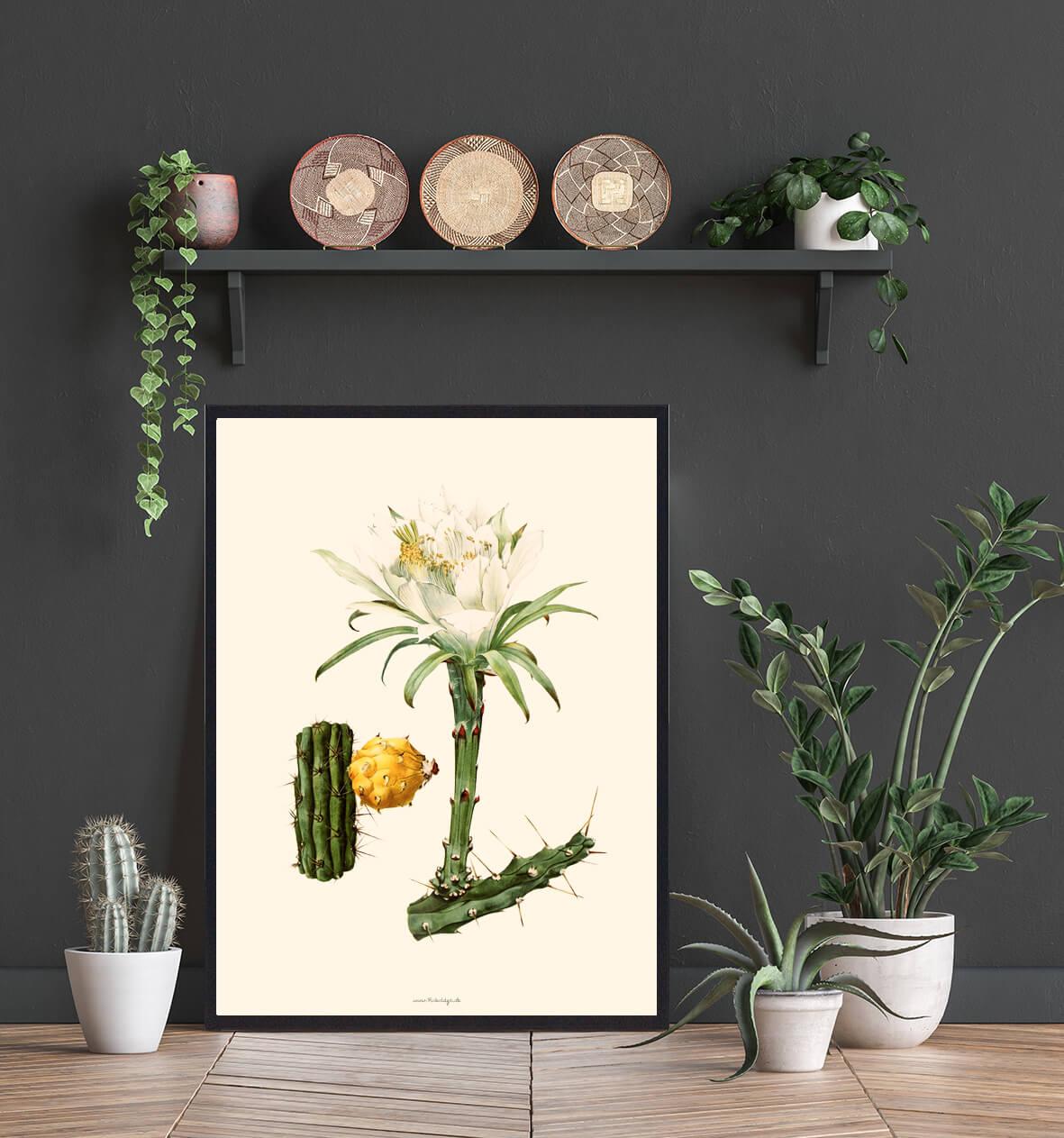 planteplakat-kaktus-3