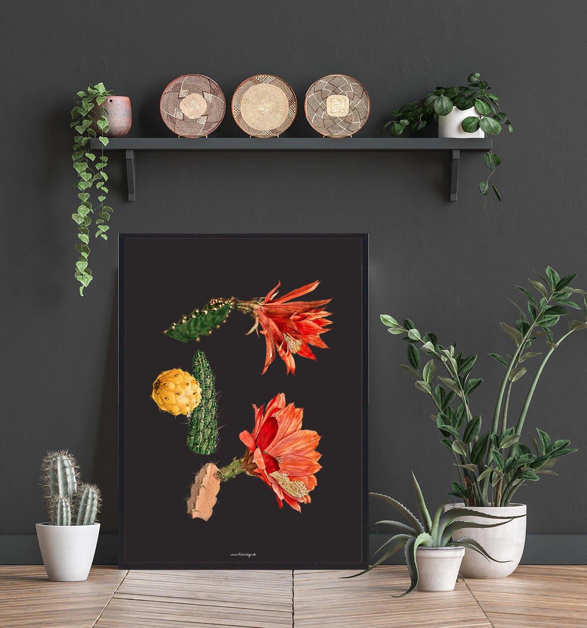 roed-blomst-kaktus-2