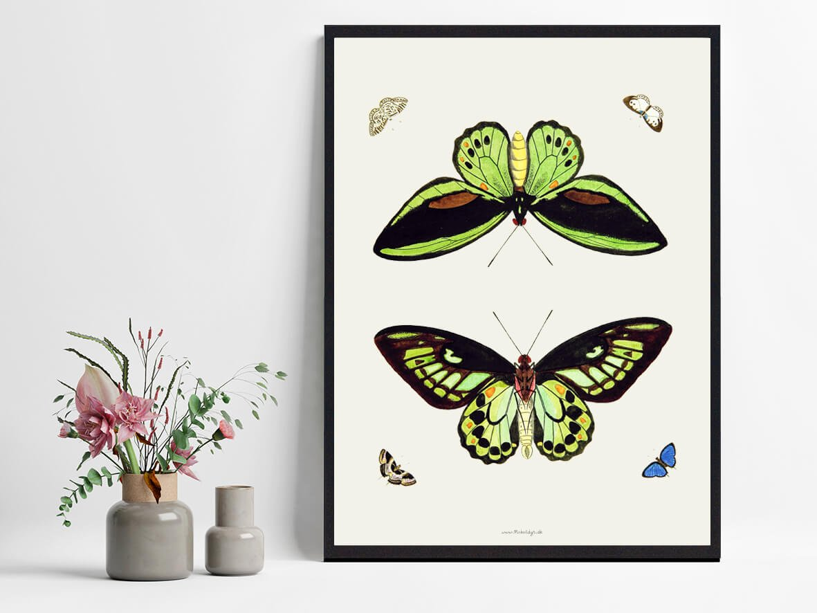 sommerfugle-plakat-hjemmet-2