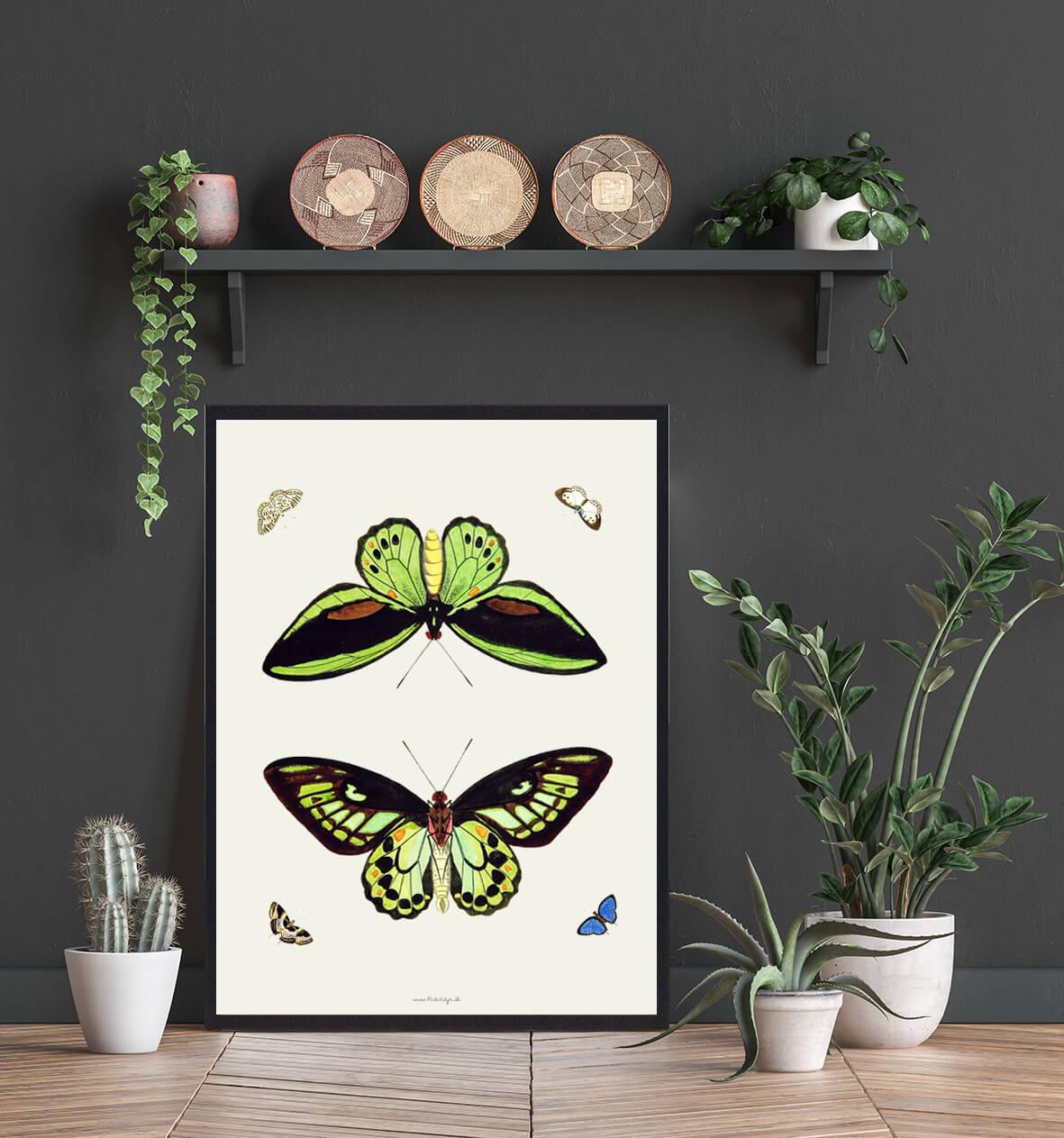 sommerfugle-plakat-hjemmet-3