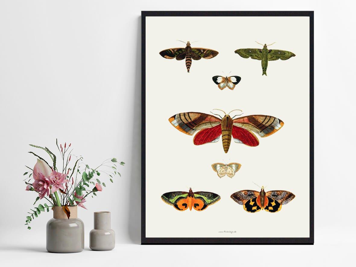 sommerfugle-plakat-indretning-2