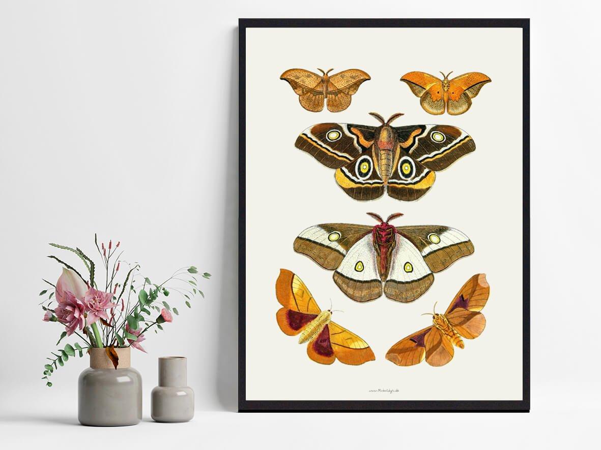 sommerfugle-plakater-boligindretning-2