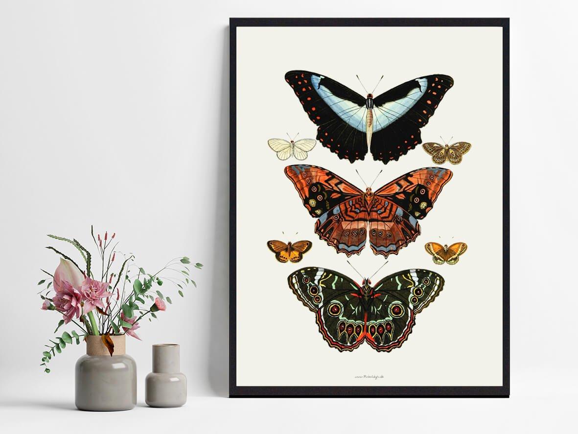 sommerfugle-plakater-hjemmet-2