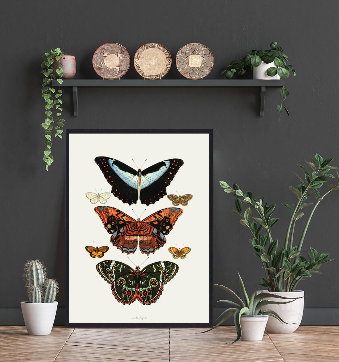 sommerfugle-plakater-hjemmet-3