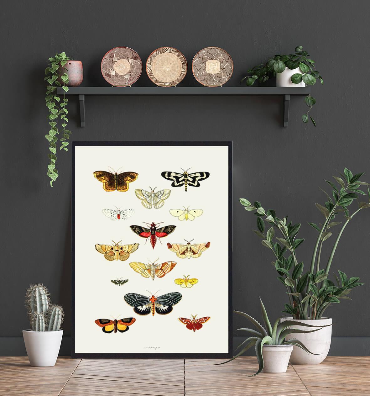 sommerfugle-plakater-koeb-3