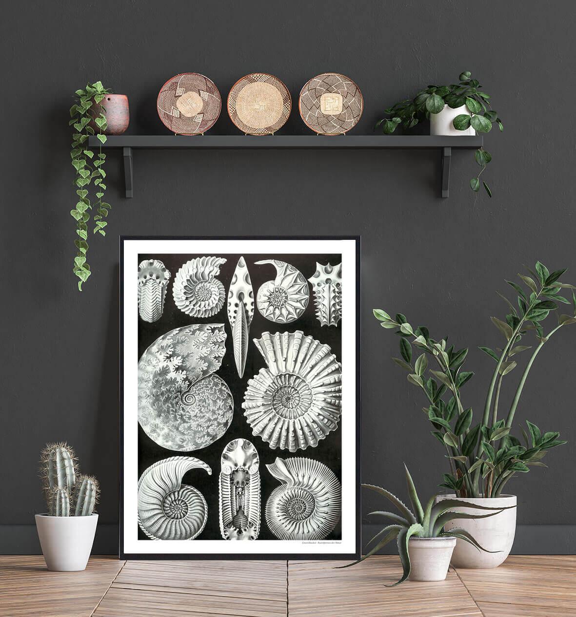 blæksprutte-fossiler-plakat-2