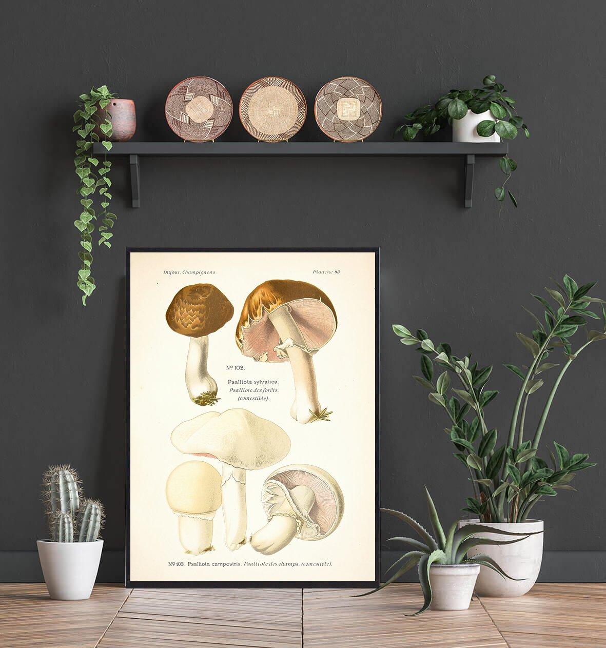 blod-champignon-plakat-2