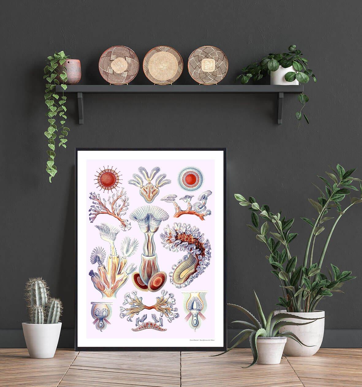 bryozoa-mosdyr-plakat-2
