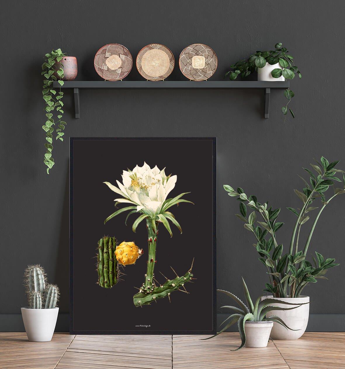 flot-hvid-kaktus-2