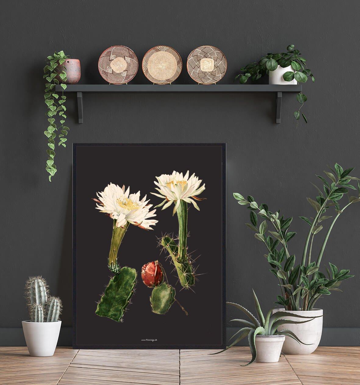 hvid-blomst-kaktus-2