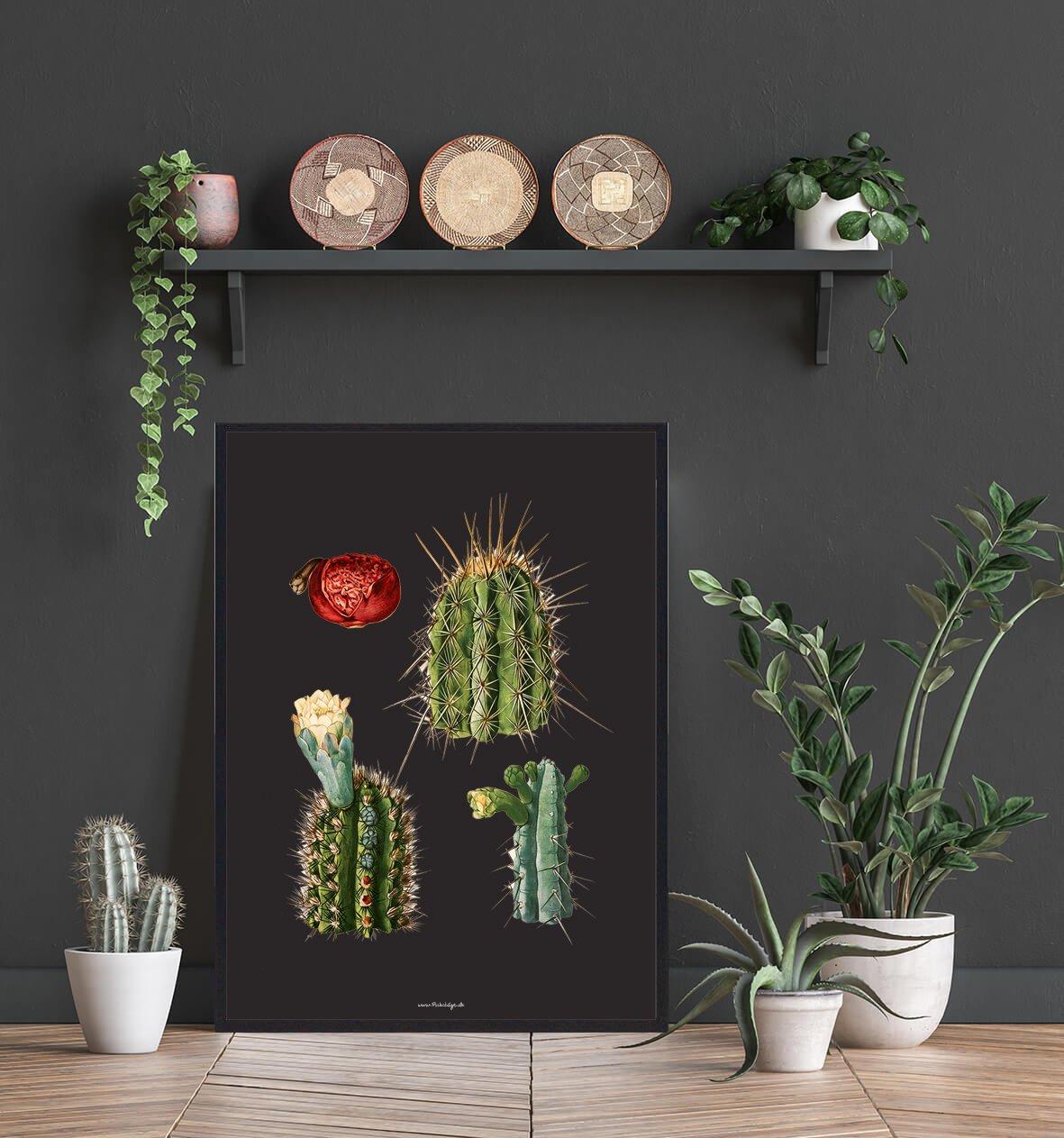 kaktus-billede-plakat-2