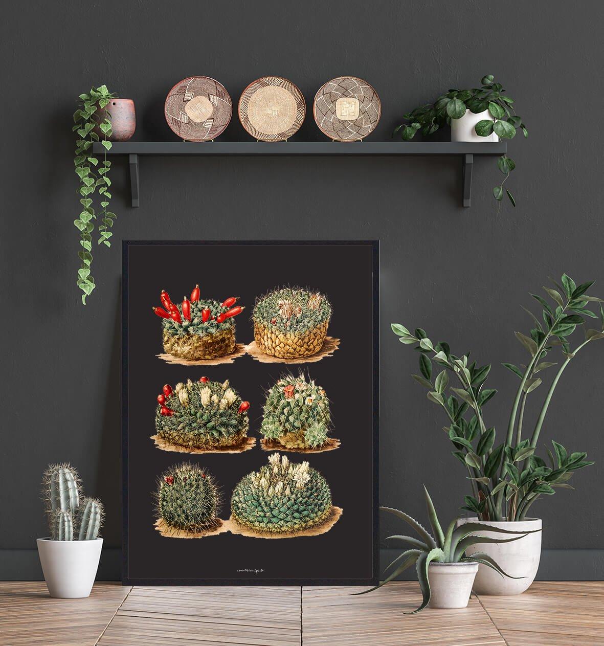 kaktus-diverse-bolig-2