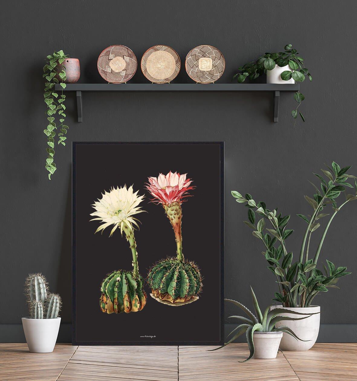 kaktus-i-blomst-2