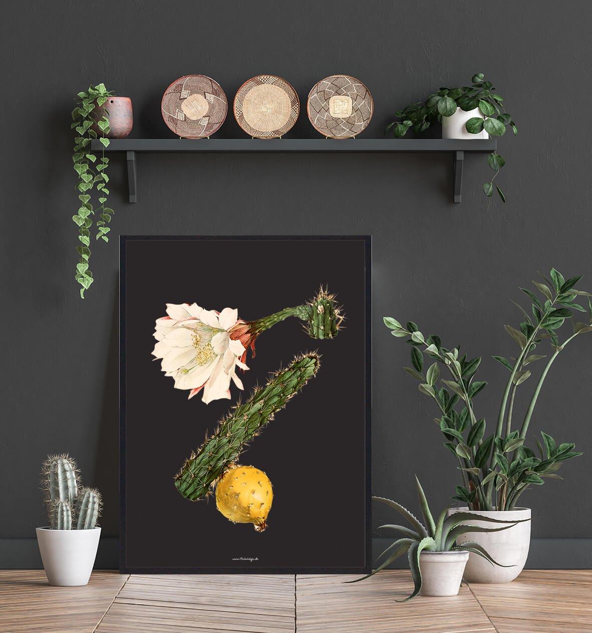 kaktus-smuk-bolig-2