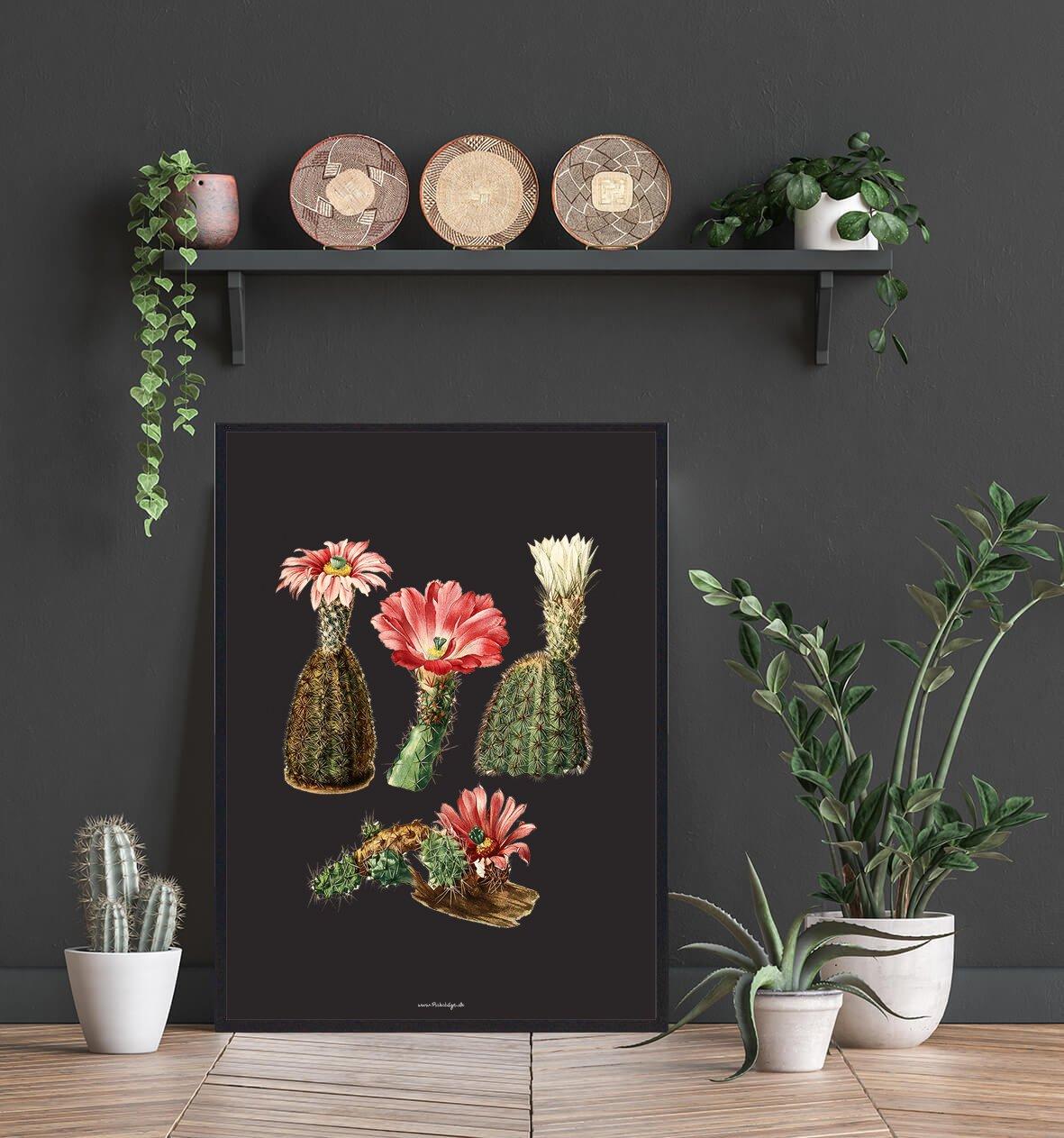 kaktusser-roed-blomst-2
