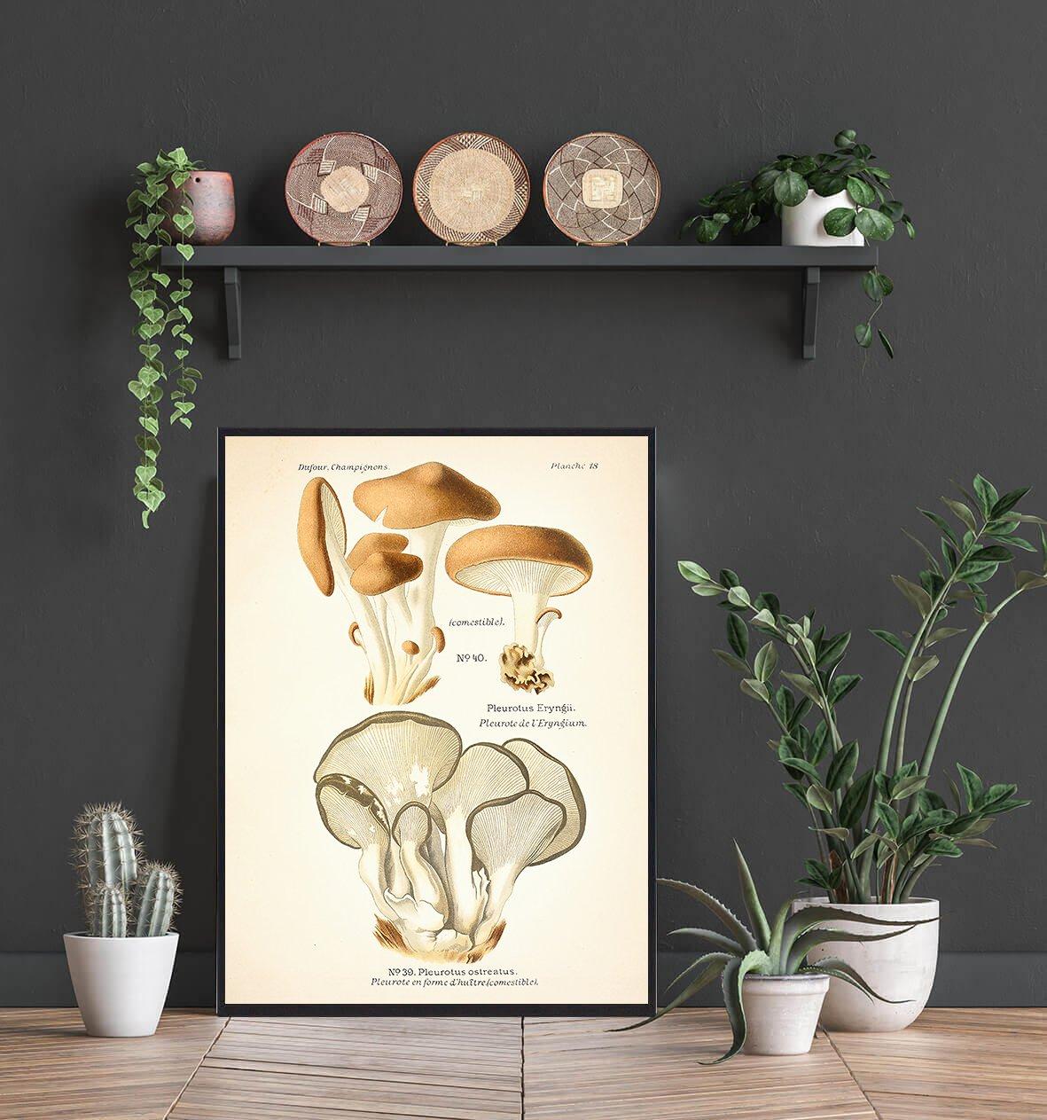 kejserhat-svamp-plakat-2