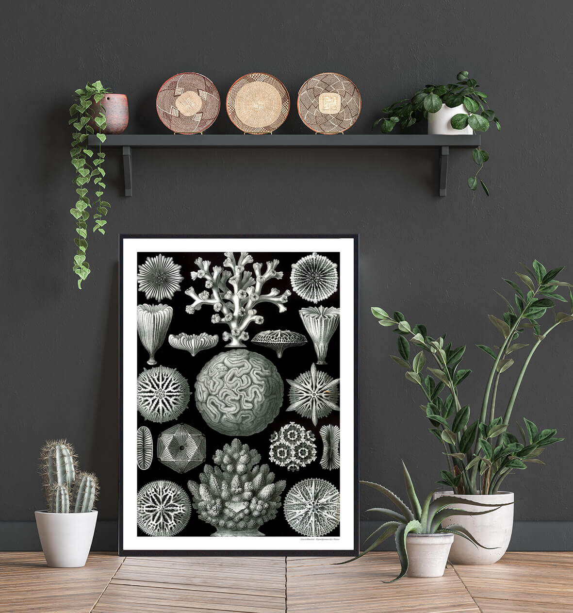 mangearmede-koraldyr-plakat-2