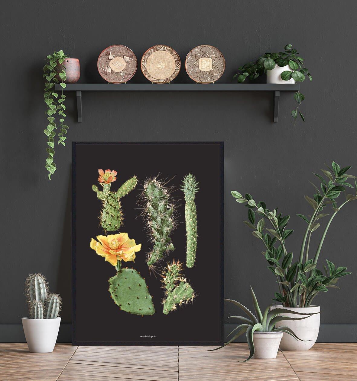 masser-af-kaktus-2
