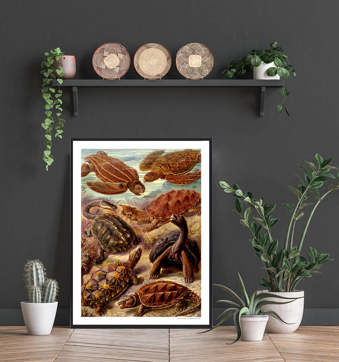 skildpadder-natur-plakat-2