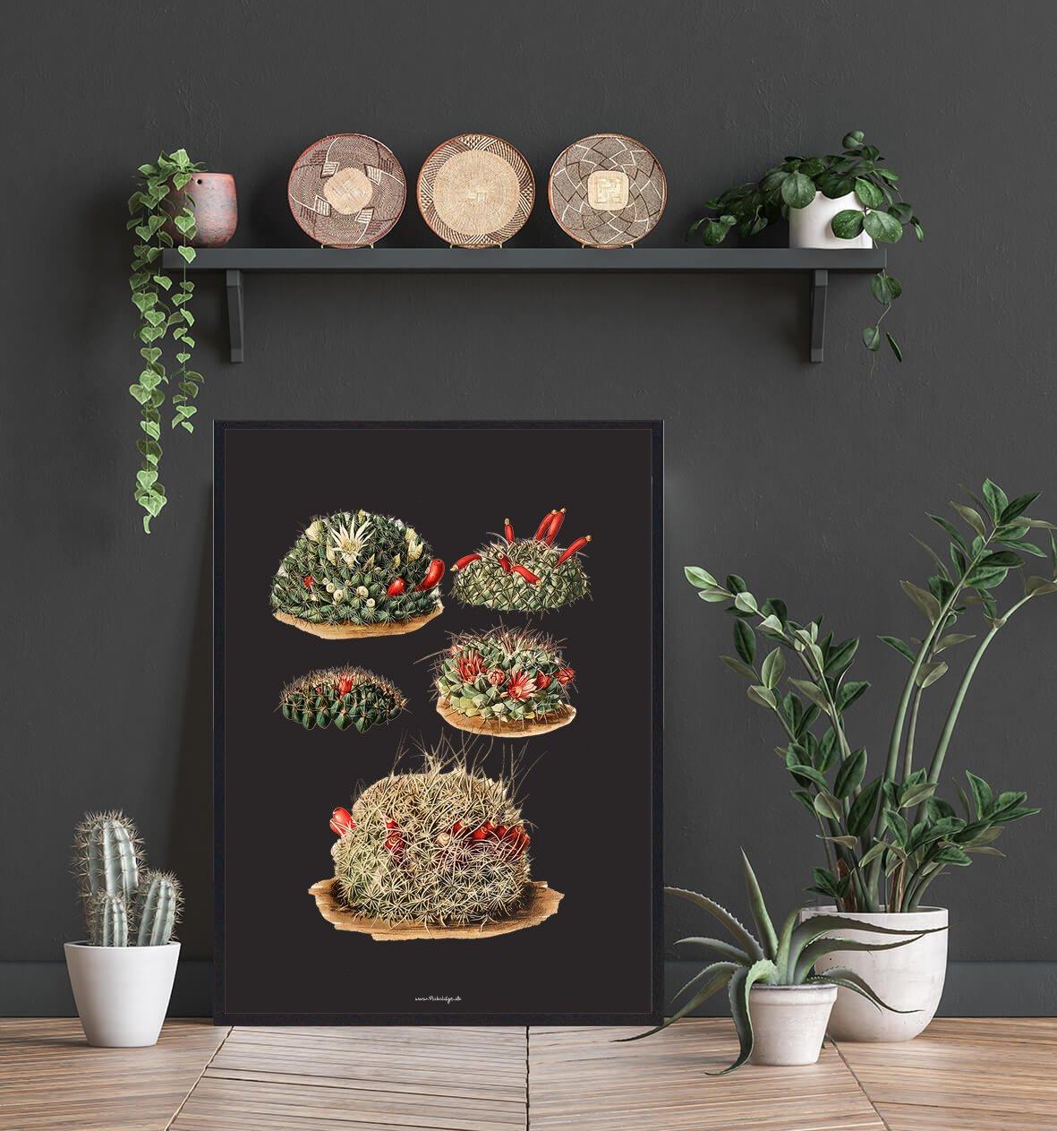 smuk-plante-kaktus-2