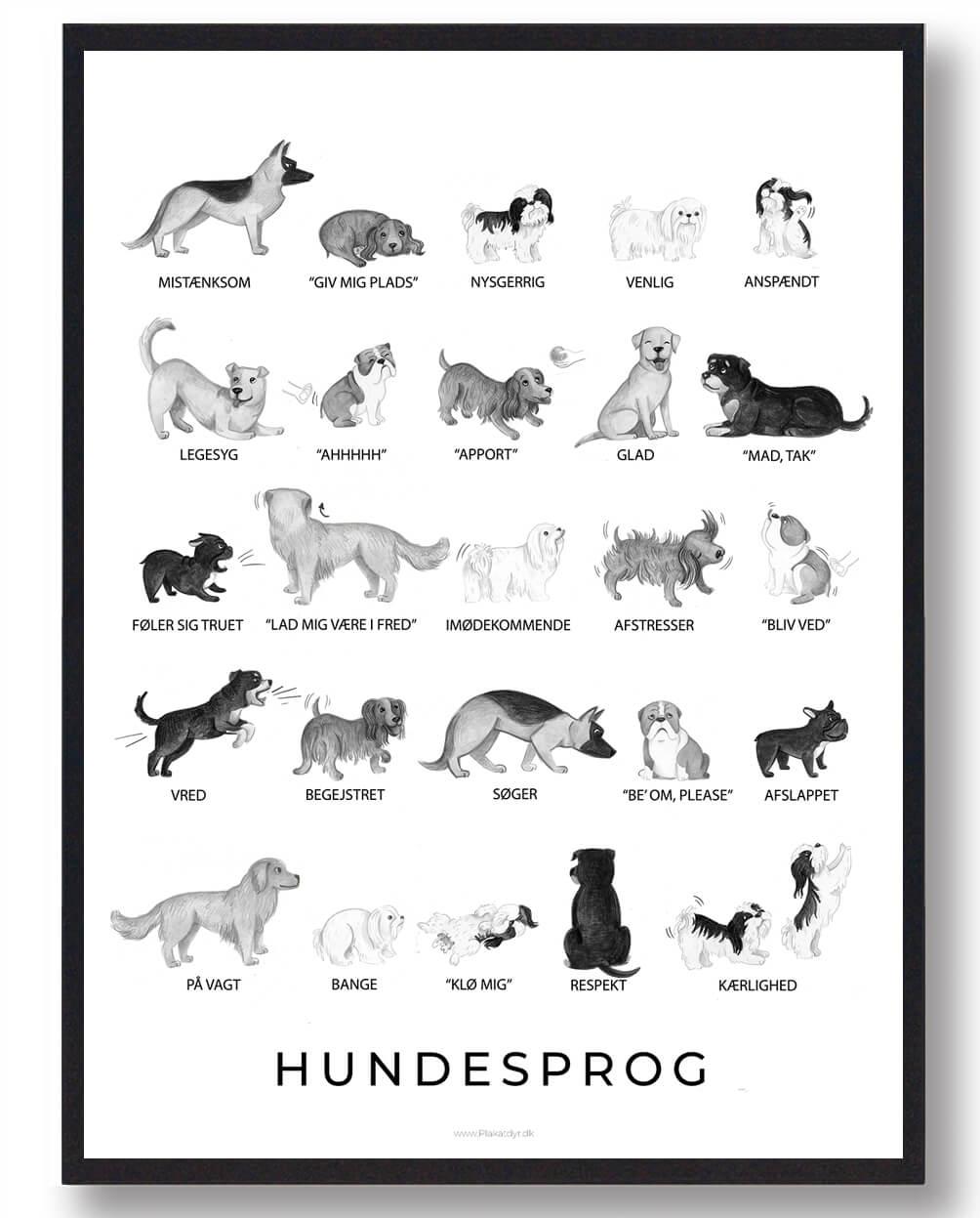 Hundesprog sort/hvid - plakat