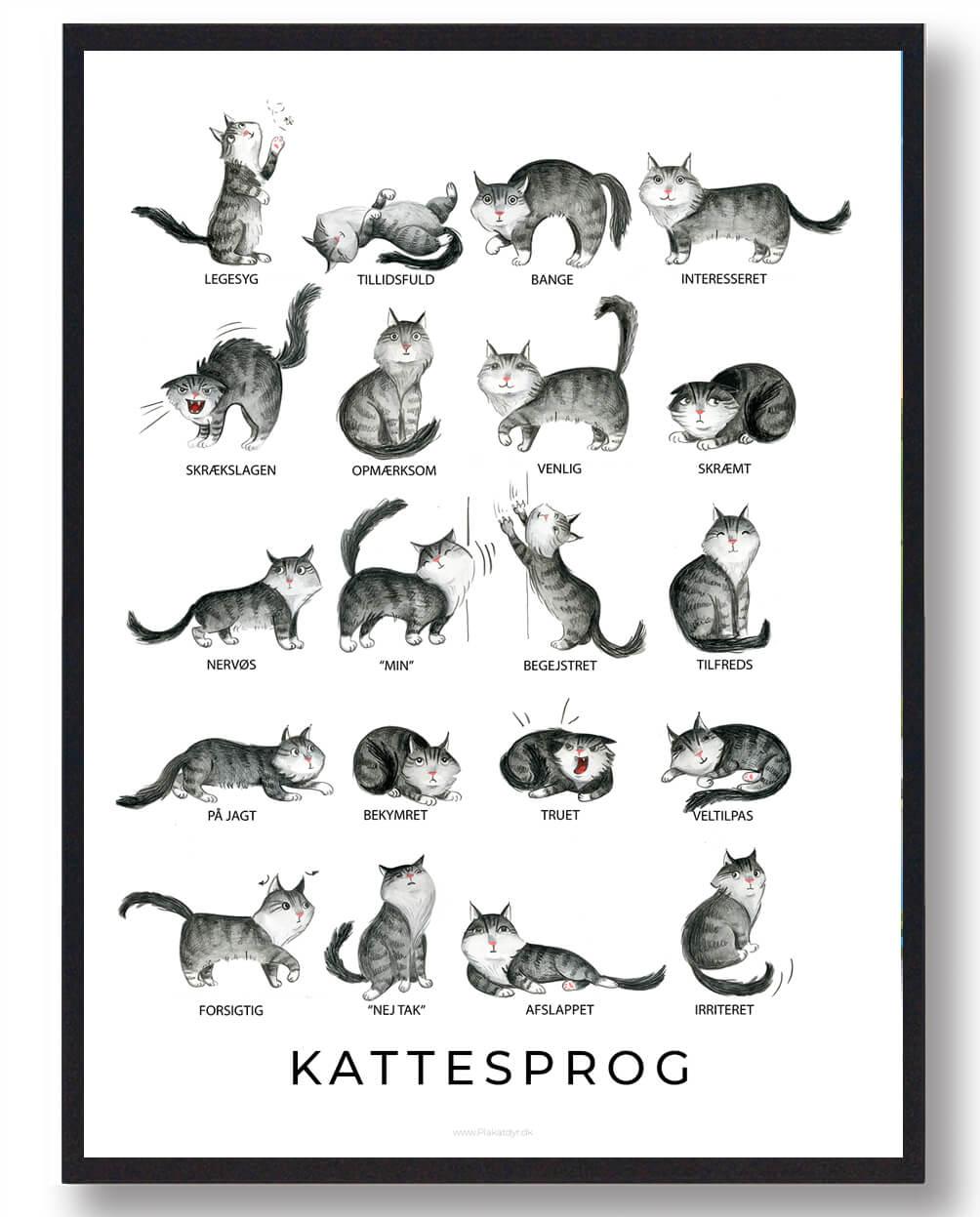 Kattesprog - plakat